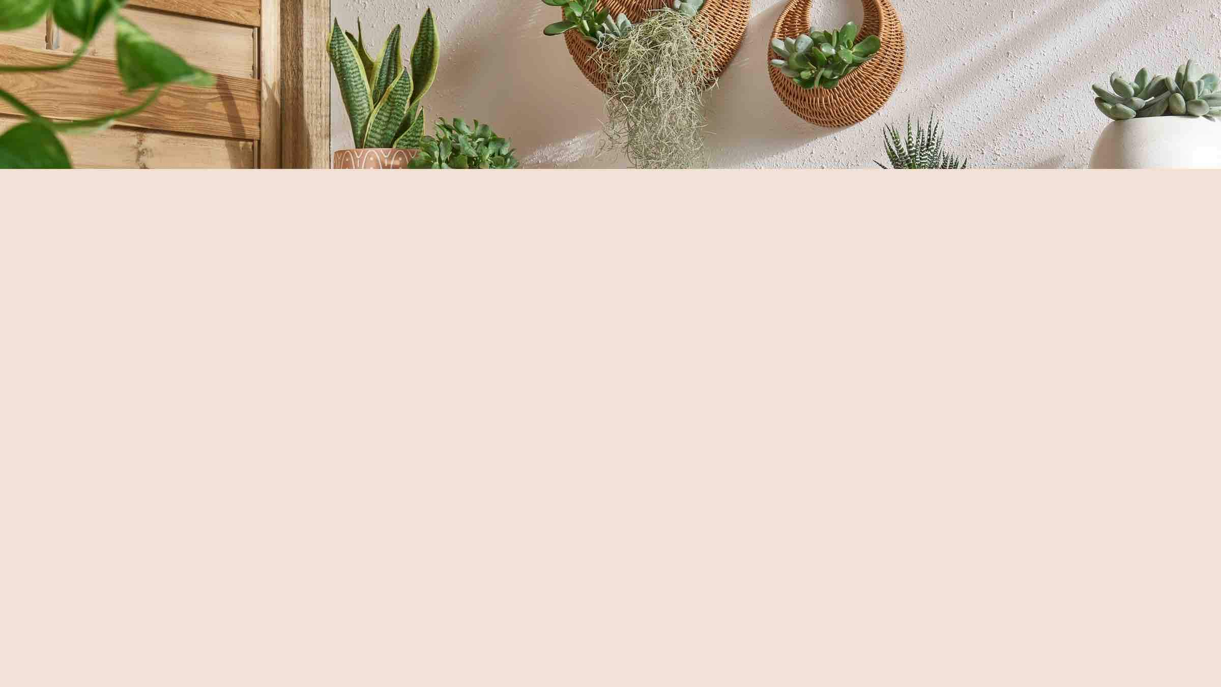 A variety of plant pots in front of a white wall with two hanging wicker planters.